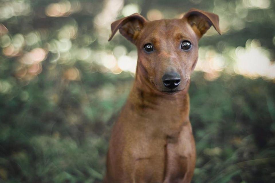 Rio pas za udomljavanje slikan od naprijed