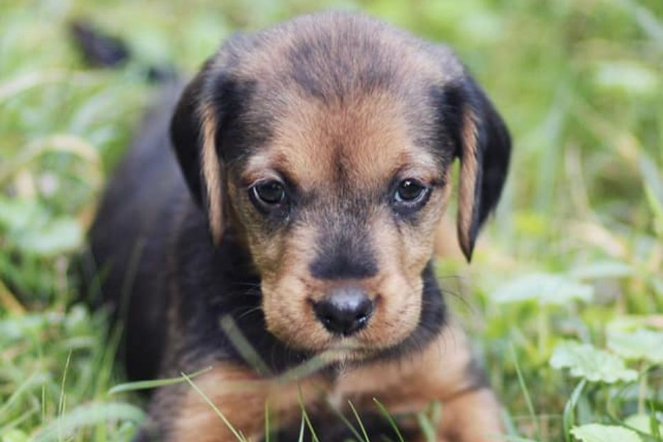 Flossie pas za udomljavanje