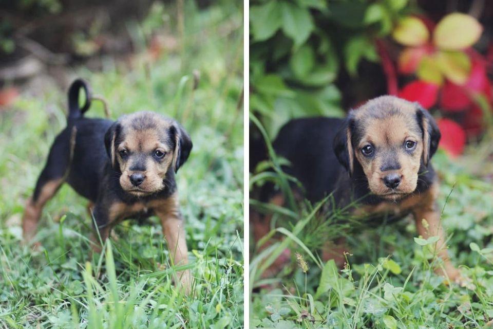 Flossie pas za udomljavanje dvije slike