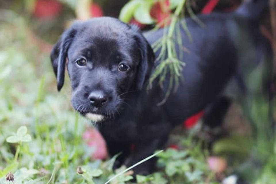 Viva pas za udomljavanje