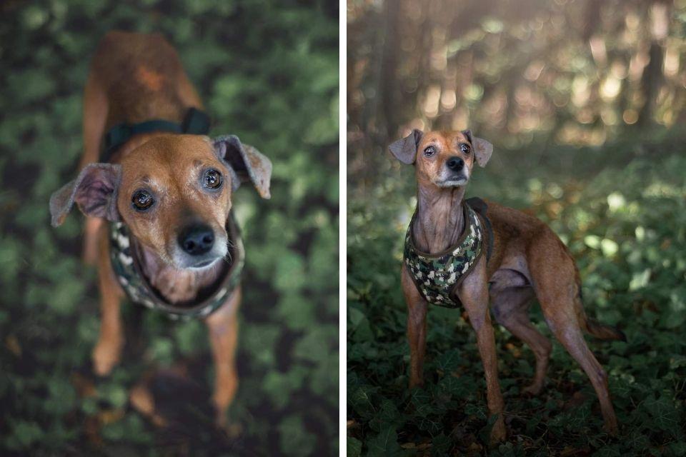 Kam pas dvije slike