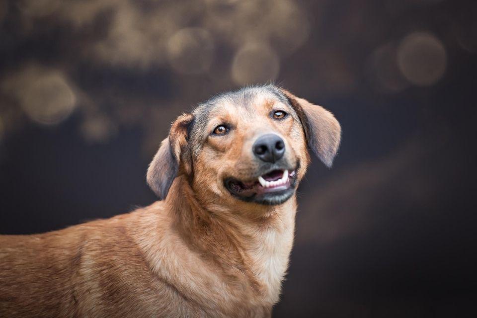 Nyla pas za udomljenje