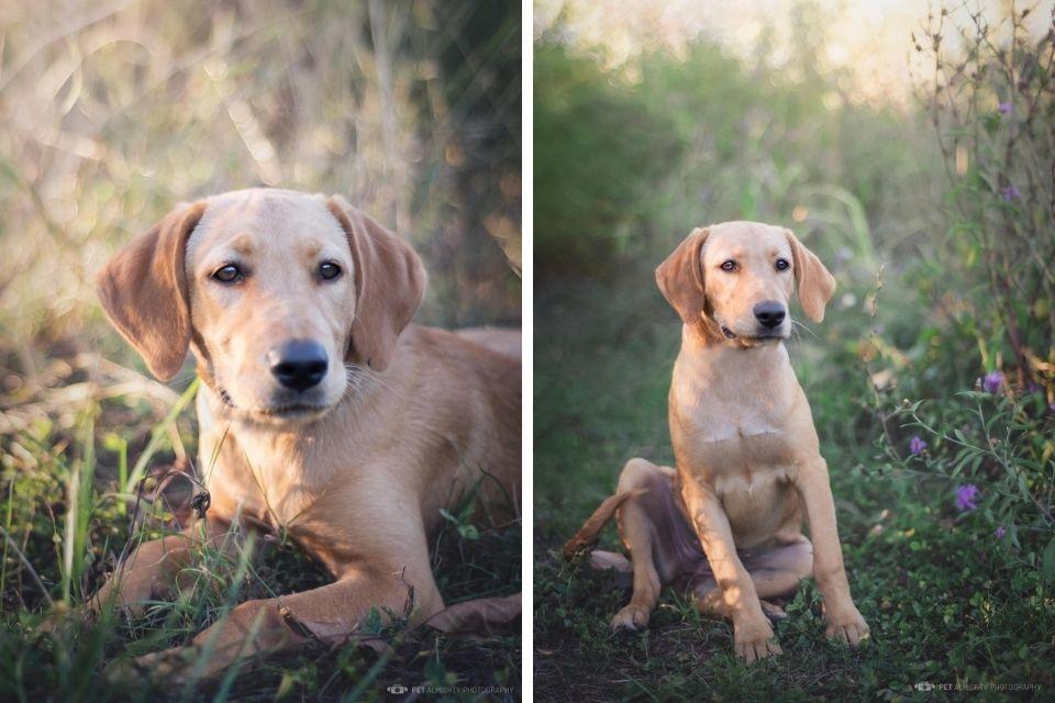 Emy pas za udomljavanje slika od naprijed